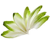 Endive chicory leaves isolated on a white backgroun — Stock Photo