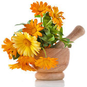 Herbal flower of calendula Officinalis in wooden mortar Isolated on white background — Stock Photo