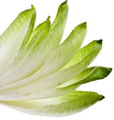 Endive chicory leaves isolated on a white background — Stock Photo