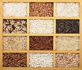 Variety of rice grains (white, brown, black, wild, basmati, arborio, short, long grain) in vintage wooden case box — Stock Photo