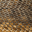 Snake skin texture closeup — Stock Photo