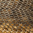 Stock Photo: Snake skin texture closeup