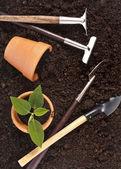Zahradnické nářadí a sazenice v půdě — Stock fotografie