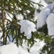 Stock Photo: Fir branches in snowdrift