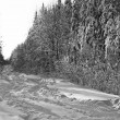 Snowy winter road in the fir forest — ストック写真