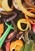 Compost pile of kitchen scraps — Stock Photo