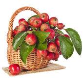 Elma meyve ahşap sepeti — Stok fotoğraf