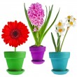 Collection set of spring flower bouquet — Stock Photo
