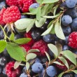 Background of assorted fresh berries — Stock Photo