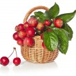 Stock Photo: Apple fruits in wicker basket
