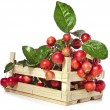 Stock Photo: Apple fruits heap in wooden box