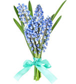 Bunch of Springs flowers Muscari — Foto Stock