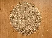 Sementes de cânhamo — Foto Stock