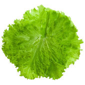 Fresh salad lettuce close up — Stock Photo
