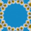 Border Frame of chamomile — Stock Photo