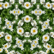 Abstract Frame Pattern of field daisy flowers — Stock Photo