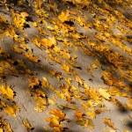 sfondo autunno dalle foglie colorate cadute — Foto Stock #44482961