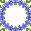Art Abstract Frame of Campanula blue flower — Stock Photo #44483137