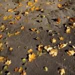 höstens bakgrund från de färgglada löv — Stockfoto