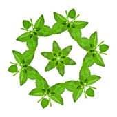 Design pattern of green sweet mint leaves — Stock Photo