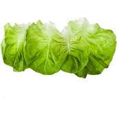 Border of Fresh Lettuce Salad — Stock Photo