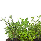 Useful herbs — Stock Photo