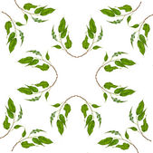 Abstract Frame Pattern of green leaves of ficus tree — Stock Photo
