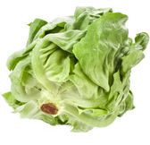 Bunch Head of Fresh Green Salad — Stock Photo