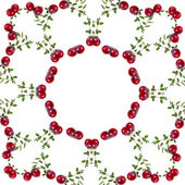 Floral Abstract Pattern Frame of fresh cranberries plant — Stock Photo