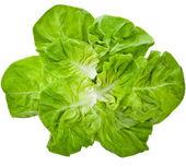 Bunch of Fresh Green Salad — Stock Photo