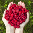 Handful of ripe raspberries — Stock Photo #48501651