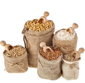 Corn kernel seed meal and grains — Stock Photo
