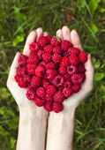 Handful of ripe raspberries — Stock Photo