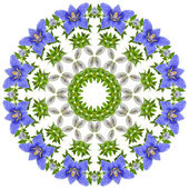 Pattern of Campanula blue flower — Stock Photo