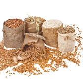 Set of seed meal and grains — Stock Photo