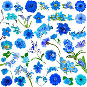 Set of various blue flowers — 图库照片