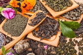 Collection of different dry types tea — Stockfoto