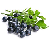 Blueberry closeup — Stock Photo