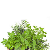 Useful herbs in flower pot — Stockfoto