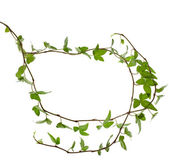 Frame of Green ivy plant — Stock Photo