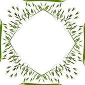 Frame decor of fresh green oat — Stock Photo