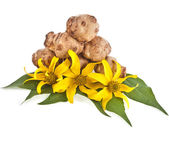 Jerusalem artichoke with flower — Stock Photo