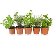 Collection of aromatic herbs — Stock Photo