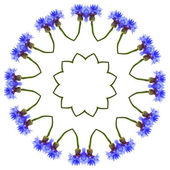Pattern of Cornflower — Stock Photo