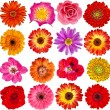 Collection set of Red Flower heads — Stock Photo
