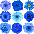 Various Blue Flowers Head — Stock Photo #50788405