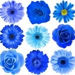 Various Blue Flowers Head — Stock Photo #50788405