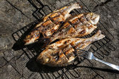 Seabass and Dorado fish grilled dish — Stock Photo