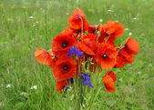 Bouquet of  red poppy flowers — Stock Photo