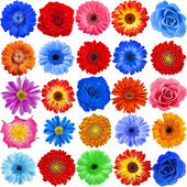 Collection set of 25 Flower heads — Stock Photo
